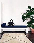 Geigenfeige neben schlichter Bank, Teppich mit Rautenmuster