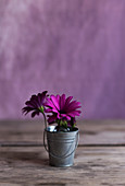 Lila Blumen in kleinem Metalleimer auf Holztisch