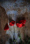 From above natural red poppies placed on shabby dirty surface