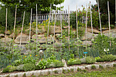 Herbs and vegetables growing in permaculture garden on slope