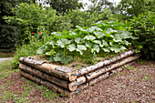Courgettes growing in rustic raised bed made from tree trunks