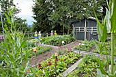 Cross-shaped paths and shed in vegetable garden