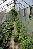 Vegetables growing in greenhouse