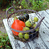 Pumpkins and chestnuts in a wire basket