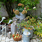 Autumn decoration with rose hips, zinc pots, and hydrangea