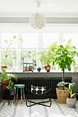 Filigraner Metallstuhl und verschiedene Zimmerpflanzen am Fenster