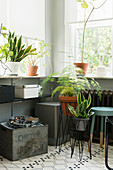 Snake plant, asparagus fern and vintage accessories below window
