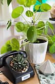 Old telephone planted with succulent next to pilea plant