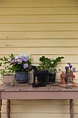 Topfpflanzen und verschiedene Dekoobjekte auf Shabby-Holztisch vor Holzwand am Haus