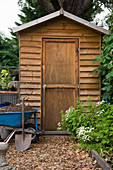 Wooden garden shed, spade and wheelbarrow of soil