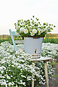 White bouquet of dahlias in a metal bucket on a chair in a bed with sneezeweed