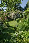 Garten im Sommer mit Rosen und Stauden