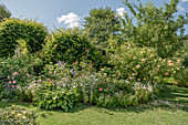 Bed of roses and perennials