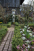 Early spring in the cottage garden with daffodils