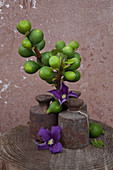 Autumnal arrangement of branches of figs, antique weights and clematis flowers