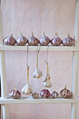 Garlic bulbs decoratively lined up and hung from ladder shelves