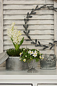 Hyacinths and wood anemones in tin containers
