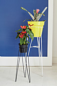 Flamingo flower and bromeliad on delicate metal plant stands
