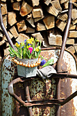 Colourful spring flowers in metal pot with wreath of onions