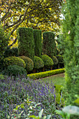 Clipped syzygiums and cypresses in gardens
