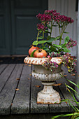 Sedum, stonecrop and pomegranates in urn