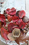 Autumnal arrangement of leaves, acorns and box with hand-drawn owl on inside base