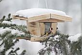 Goldfinches on snowy bird feeder resting on branch