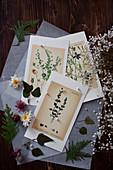 Karten mit botanischen Zeichnungen, Blätter und Blüten