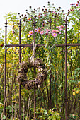 Wicker wreath on metal fence edging herbaceous border with Michaelmas daisies