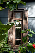 View through plants to narrow window with shutters