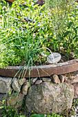 Herb garden planted in old cartwheel