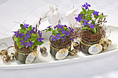 Violets in glass jars with tags and quail eggs in china dish