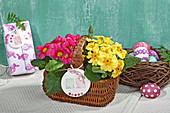 Primulas in basket with Easter greeting on tag
