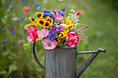 Colorful bouquet of summer flowers in a zinc watering can