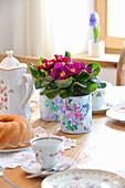 DIY-Blumentöpfe mit Primeln auf Kaffeetisch