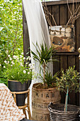 Plants in various containers and vintage-style accessories on terrace