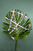 Monstera-Blatt dekorativ verziert mit rosa Tape-Streifen