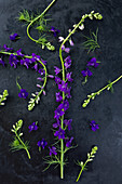 Field larkspur arranged on dark surface