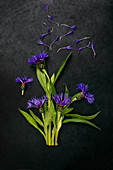 Perennial cornflowers on dark surface