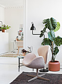 Designer armchair and Swiss cheese plant in Scandinavian-style living room