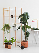 Swiss cheese plant and other houseplants in front of wooden screen frame