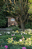 Tree house behind bed of box hedges and roses