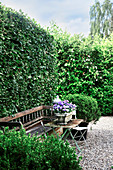Bench framed by hedge and box bushes with box of violas on table
