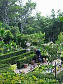 Mediterraner Garten mit Hecken, Oleander-Stämmchen und Wasserbecken, Mann gießt Kübel