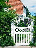 White garden gate and flowering lilac