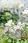 Small bouquet of lilac blossoms in a decorative watering can