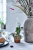White Star-of-Bethlehem planted in terracotta pot decorated with eggs on set table
