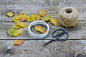 Ingredients for beech leaves wreath: leaves, scissors, wire and string