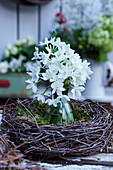 Bouquet of cream narcissus 'Paperwhite' in wreath of birch twigs