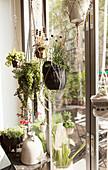 Various houseplants in handmade plant hangers in front of window